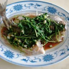 蒜香蒸鲈鱼