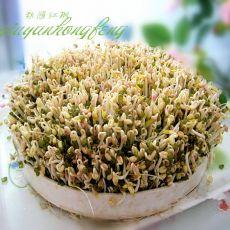 自生绿豆芽