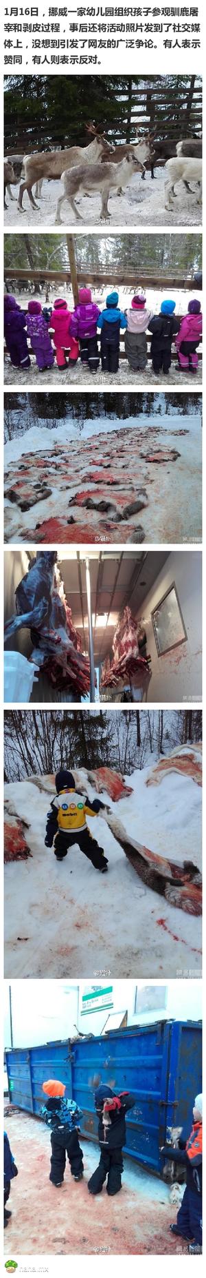 挪威幼儿园组织孩子看屠宰现场引发争议!